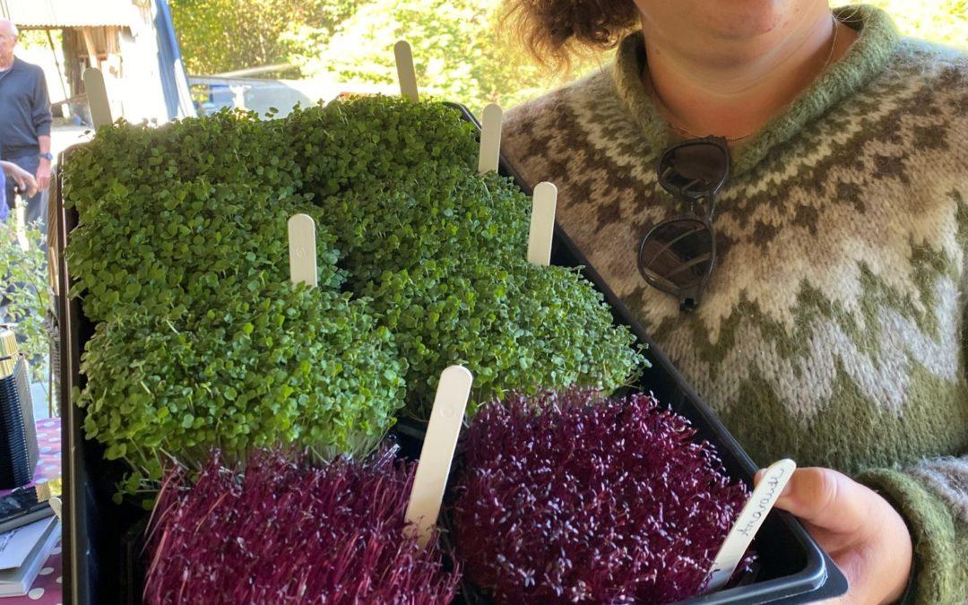 Endelig i gang med mikrogrønt i Norge